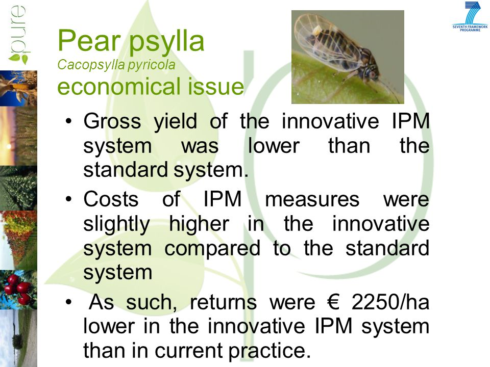 Pear psylla Cacopsylla pyricola economical issue Gross yield of the innovative IPM system was lower than the standard system.
