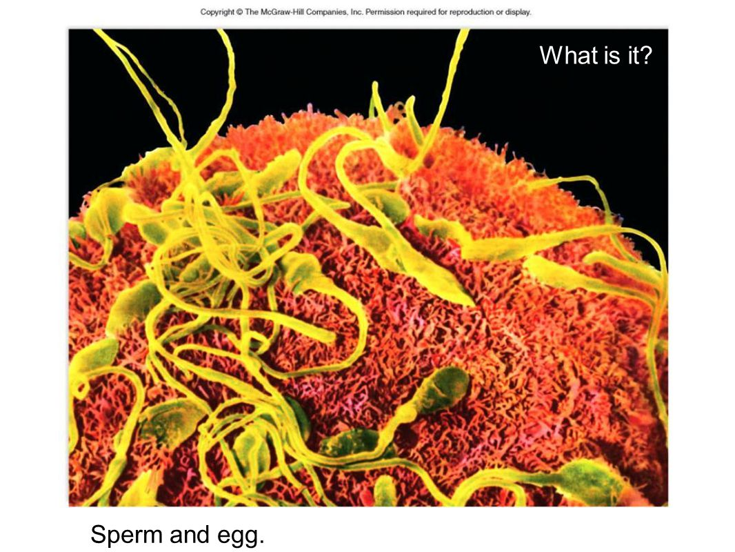 Sexual Reproduction - why is every offspring unique.