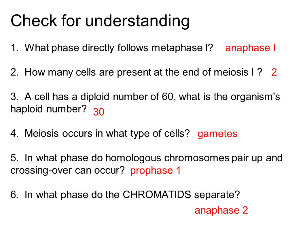 Check for understanding 1. What phase directly follows metaphase I.
