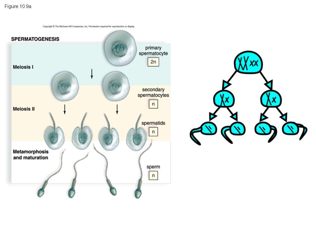 Figure 10.9a