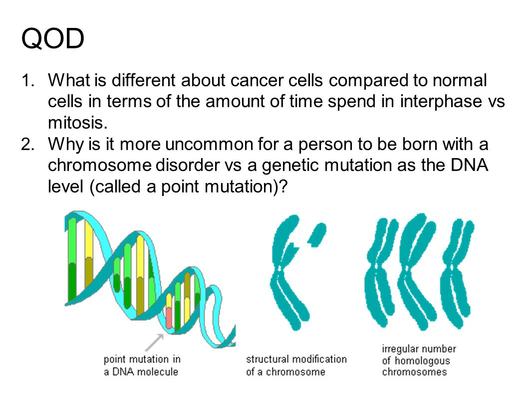 QOD 1. What is different about cancer cells compared to normal cells in terms of the amount of time spend in interphase vs mitosis. 2. Why is it more