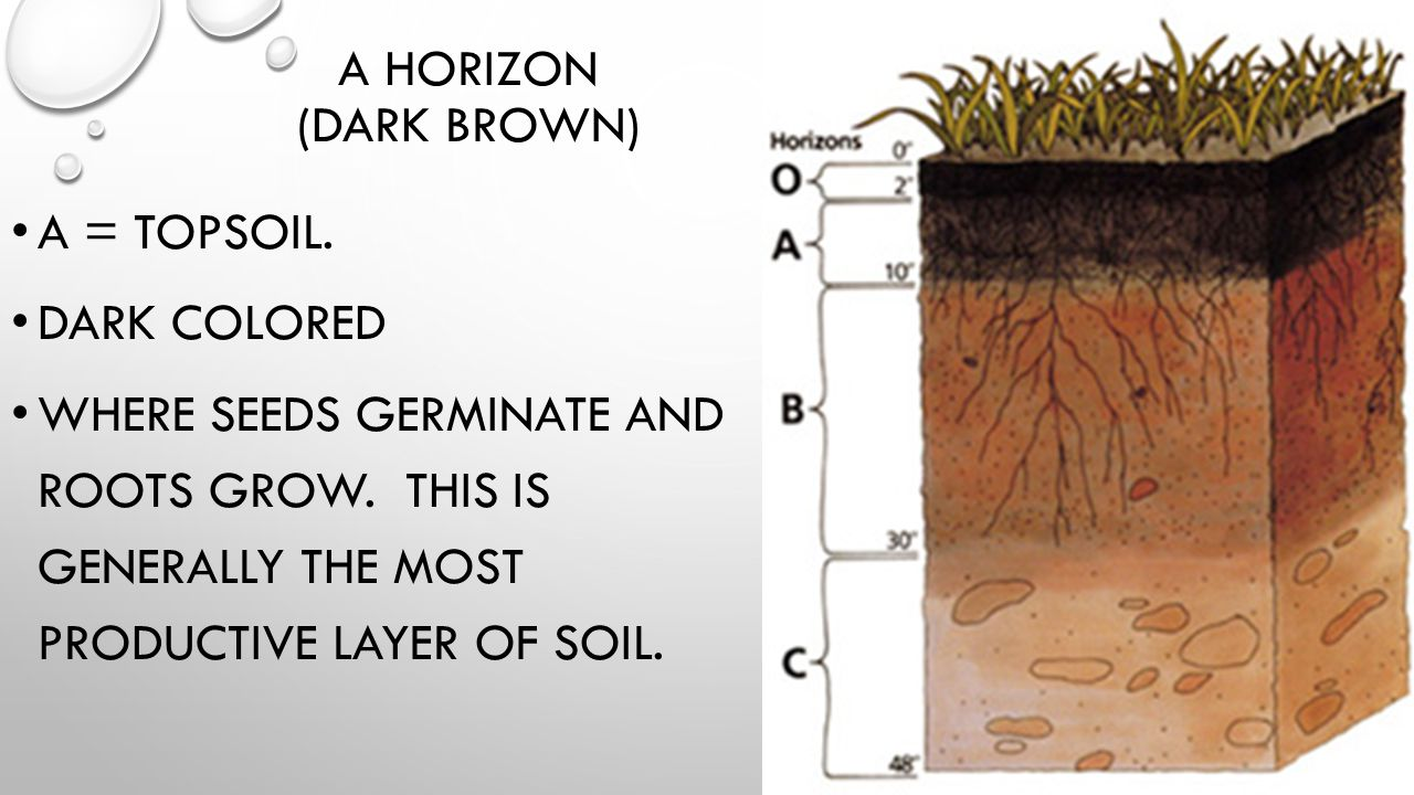 B HORIZON (LIGHT BROWN) B = SUBSOIL LIGHTER COLORED CONTAINS CLAY AND MINERAL DEPOSITS (IRON, ALUMINUM, ETC)