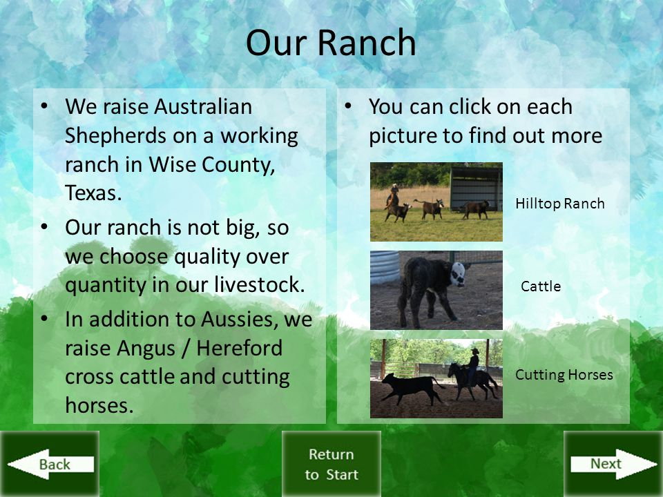 Our Ranch We raise Australian Shepherds on a working ranch in Wise County, Texas. Our ranch is not big, so we choose quality over quantity in our live