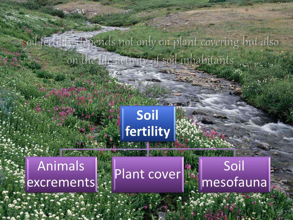 Soil fertility Animals excrements Plant cover Soil mesofauna