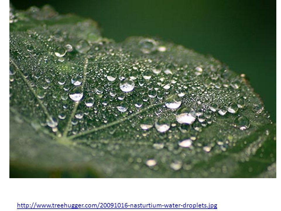 http://www.treehugger.com/20091016-nasturtium-water-droplets.jpg