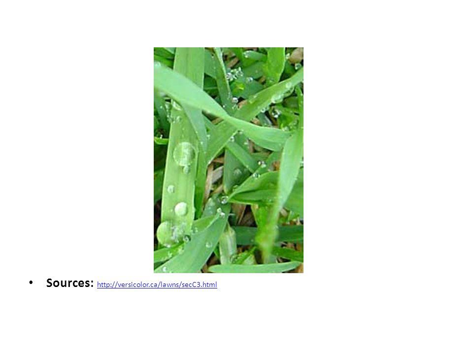 Sources: http://versicolor.ca/lawns/secC3.html http://versicolor.ca/lawns/secC3.html
