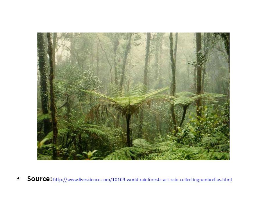 Source: http://www.livescience.com/10109-world-rainforests-act-rain-collecting-umbrellas.html http://www.livescience.com/10109-world-rainforests-act-rain-collecting-umbrellas.html