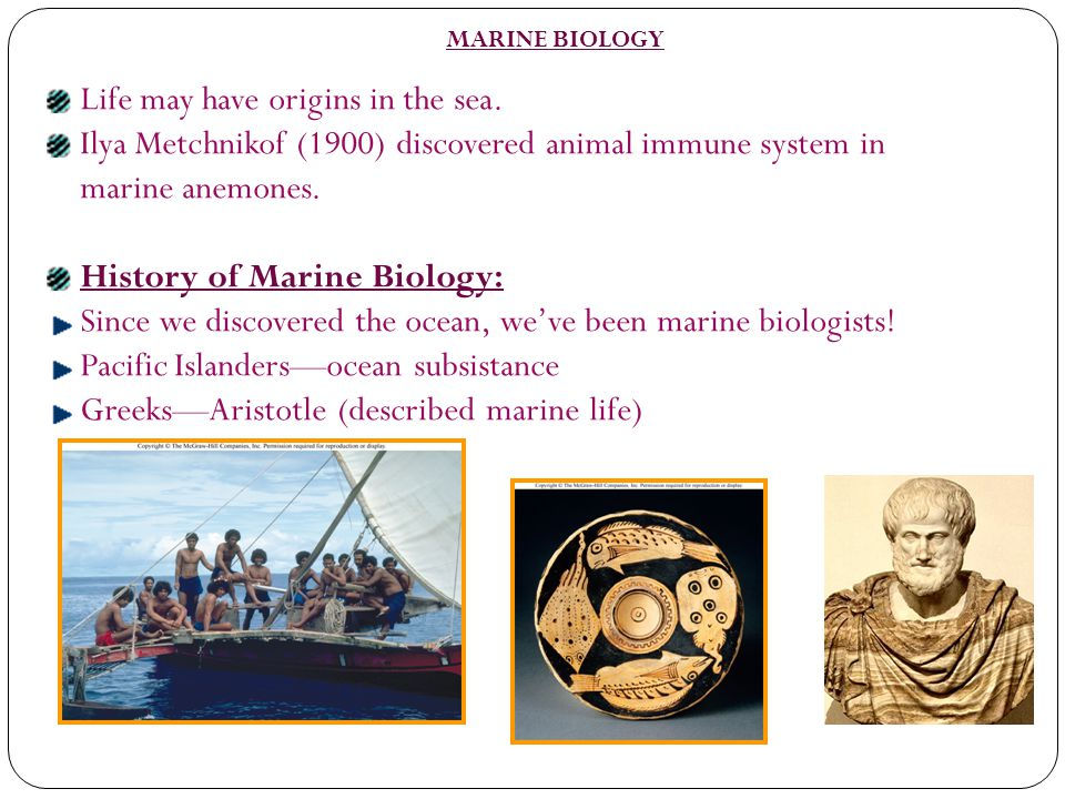 Life may have origins in the sea.