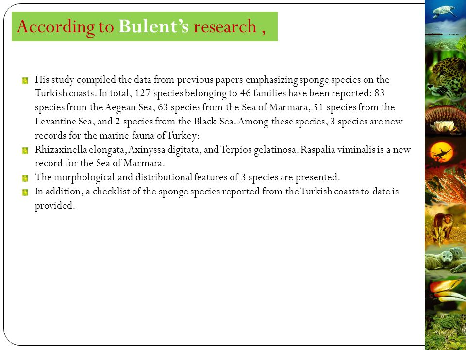 According to Bulent's research, His study compiled the data from previous papers emphasizing sponge species on the Turkish coasts.