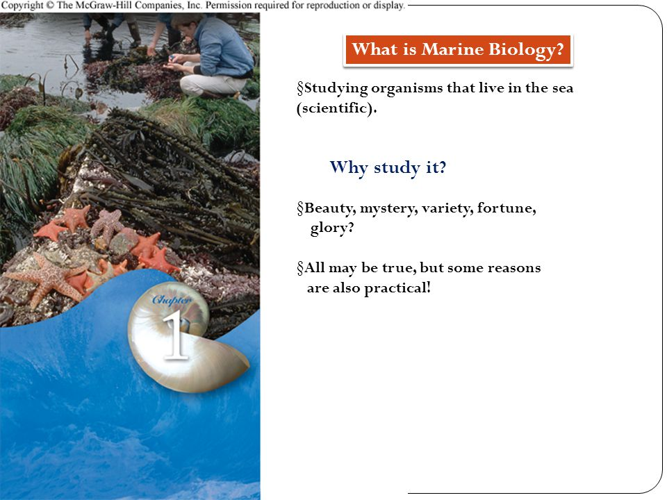 § Studying organisms that live in the sea (scientific).