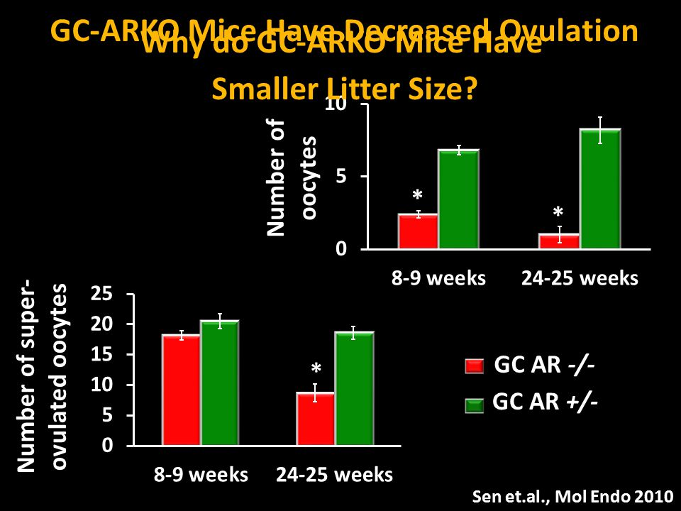 GC AR +/- GC AR -/- Number of oocytes * * Number of super- ovulated oocytes * Why do GC-ARKO Mice Have Smaller Litter Size? Sen et.al., Mol Endo 2010