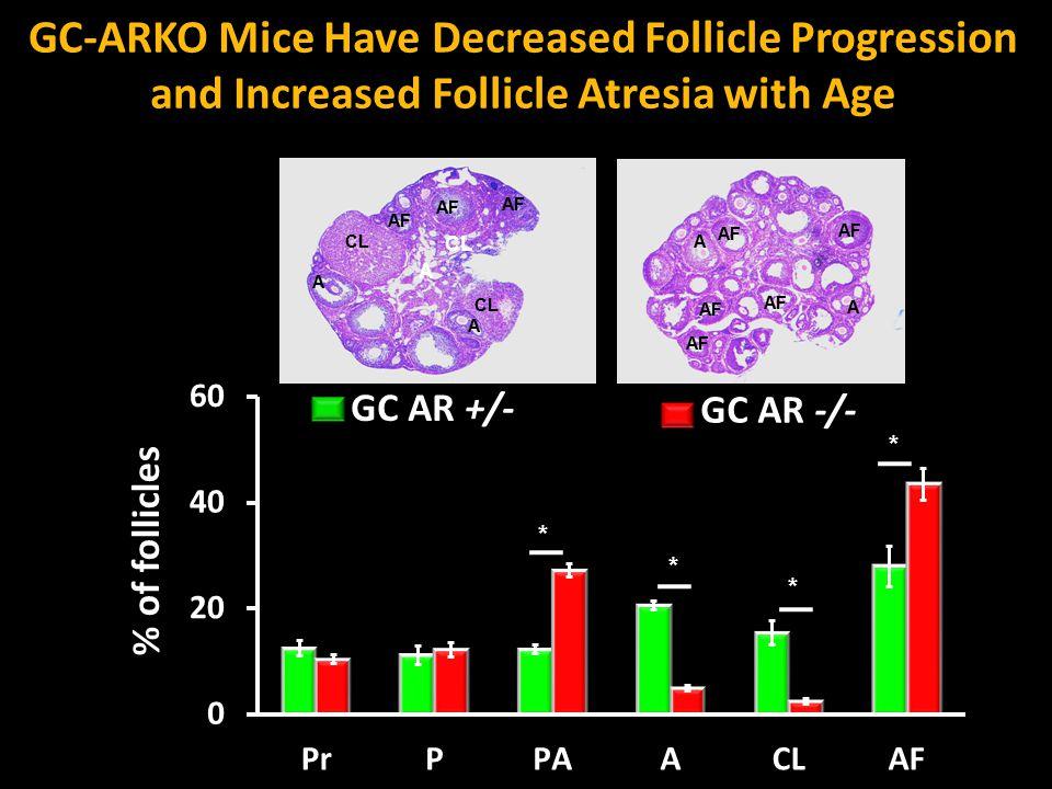 * * * * CL AF A A A A CL A GC AR +/- GC AR -/- GC-ARKO Mice Have Decreased Follicle Progression and Increased Follicle Atresia with Age % of follicles