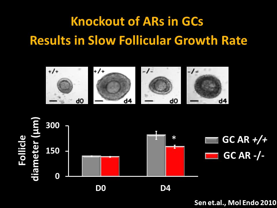 Follicle diameter (μm) * GC AR -/- GC AR +/+ Knockout of ARs in GCs Results in Slow Follicular Growth Rate Sen et.al., Mol Endo 2010