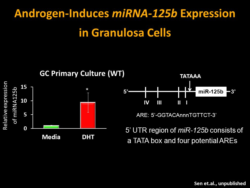 Androgen-Induces miRNA-125b Expression in Granulosa Cells Sen et.al., unpublished miR-125b TATAAA IIIIIIIV ARE: 5'-GGTACAnnnTGTTCT-3' 5' UTR region of miR-125b consists of a TATA box and four potential AREs 5'3' GC Primary Culture (WT) Relative expression of miRNA125b *