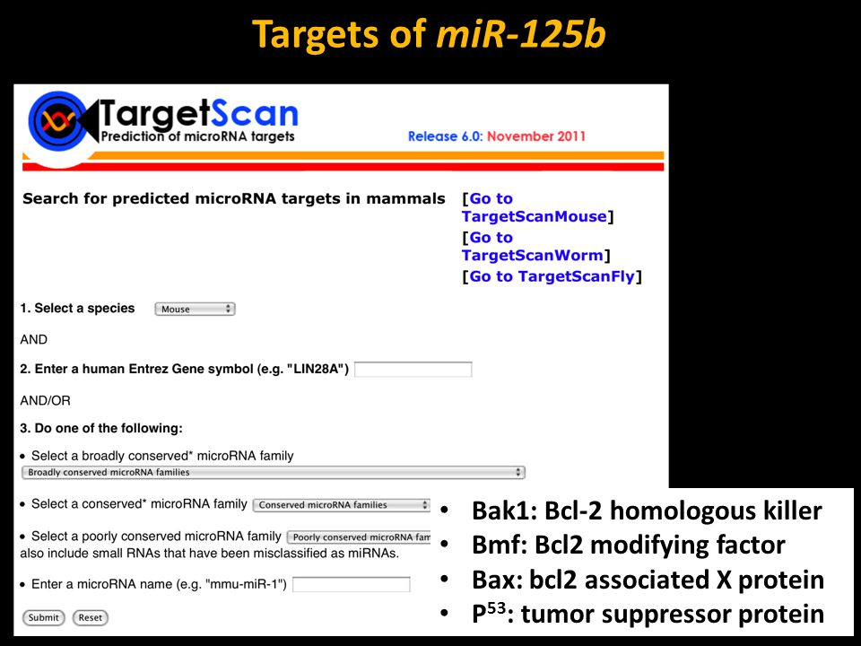 Targets of miR-125b Bak1: Bcl-2 homologous killer Bmf: Bcl2 modifying factor Bax: bcl2 associated X protein P 53 : tumor suppressor protein