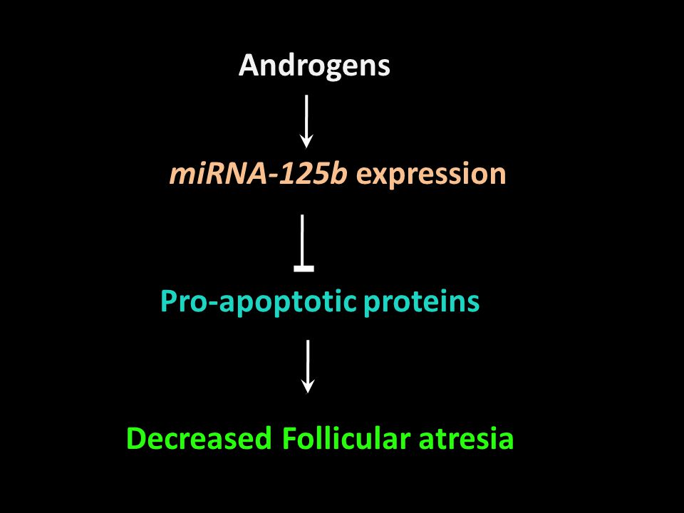 miRNA-125b expression Pro-apoptotic proteins Decreased Follicular atresia Androgens