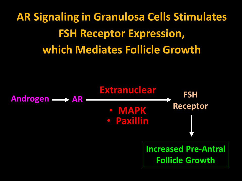 Androgen AR AR Signaling in Granulosa Cells Stimulates FSH Receptor Expression, which Mediates Follicle Growth FSH Receptor Increased Pre-Antral Folli