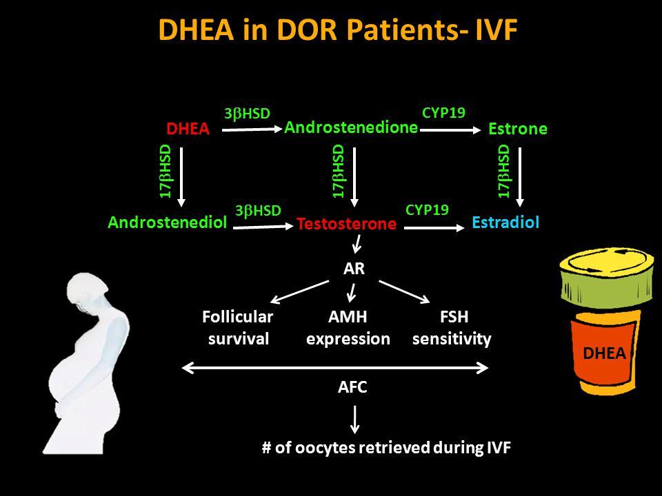 DHEA in DOR Patients- IVF DHEA Testosterone Androstenedione Androstenediol 17  HSD Estradiol CYP19 Estrone 3  HSD AR AMH expression Follicular survival FSH sensitivity # of oocytes retrieved during IVF AFC 3  HSD CYP19 17  HSD