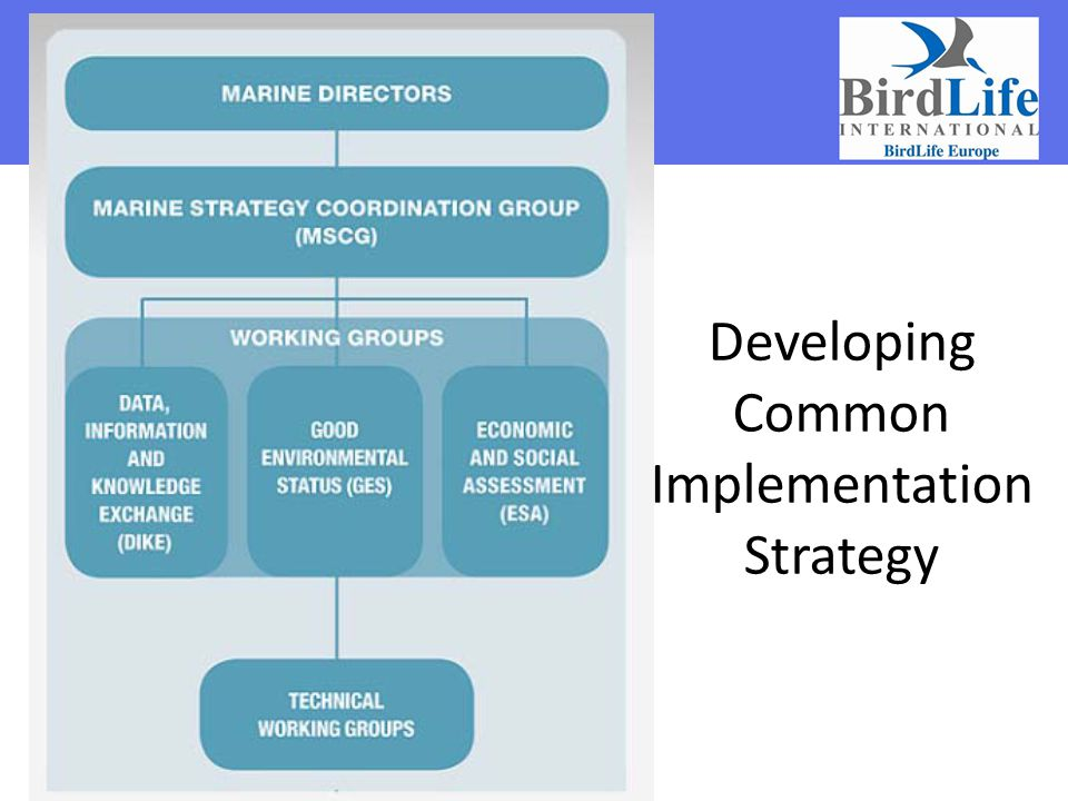 Developing Common Implementation Strategy