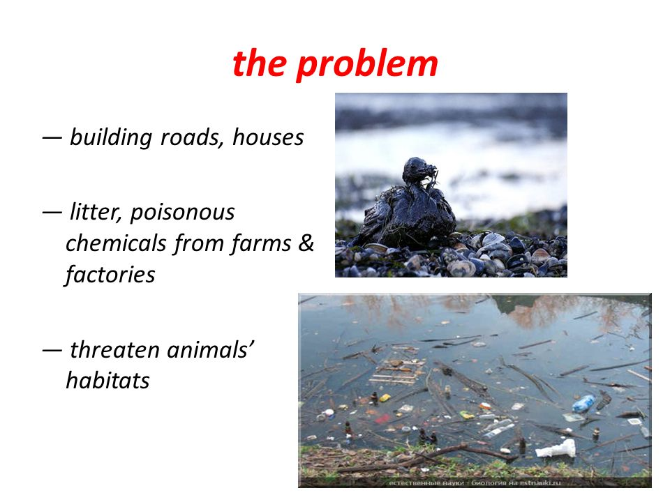 the problem ― building roads, houses ― litter, poisonous chemicals from farms & factories ― threaten animals' habitats