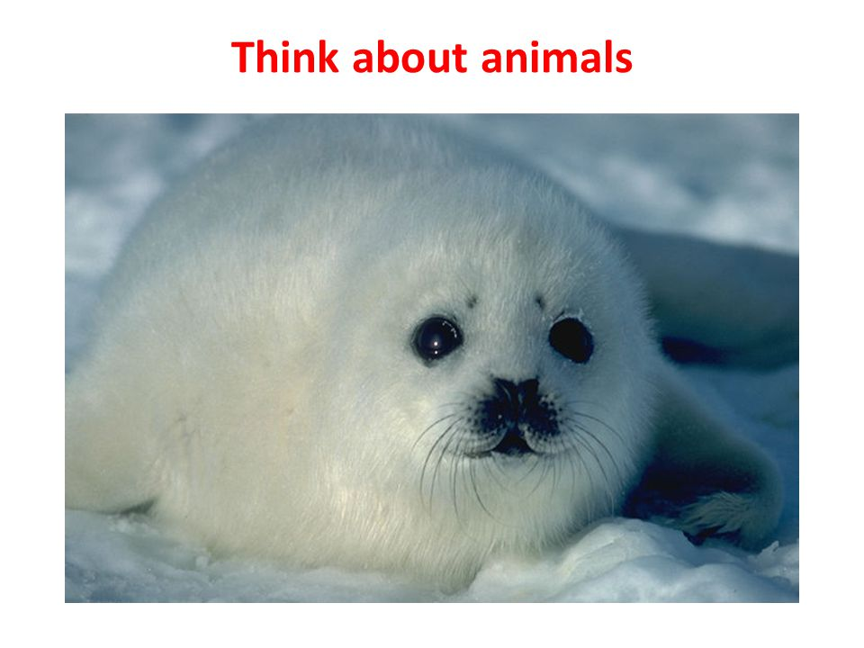 Think about animals