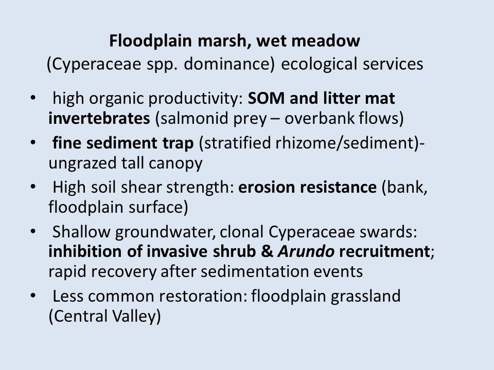 Floodplain marsh, wet meadow (Cyperaceae spp.