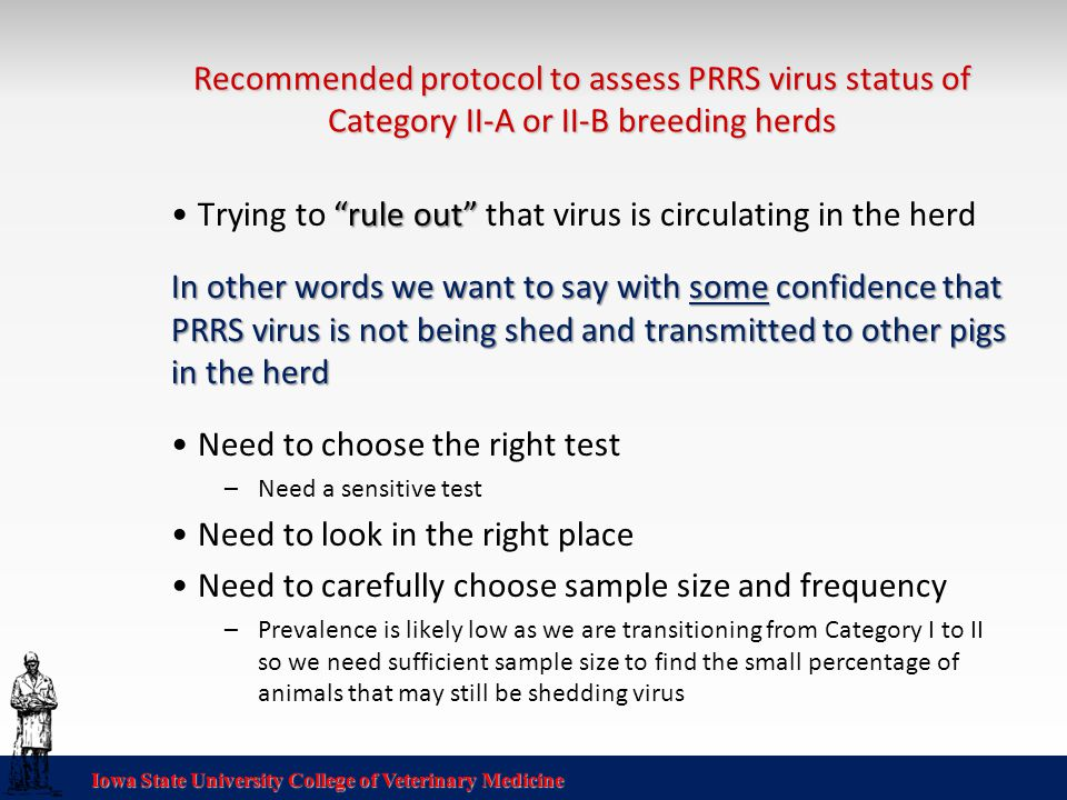 Iowa State University College of Veterinary Medicine Recommended protocol to assess PRRS virus status of Category II-A or II-B breeding herds rule out Trying to rule out that virus is circulating in the herd In other words we want to say with some confidence that PRRS virus is not being shed and transmitted to other pigs in the herd Need to choose the right test –Need a sensitive test Need to look in the right place Need to carefully choose sample size and frequency –Prevalence is likely low as we are transitioning from Category I to II so we need sufficient sample size to find the small percentage of animals that may still be shedding virus