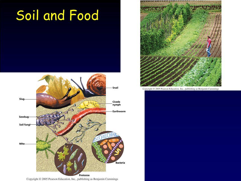 Food What do we eat.–4 main crops 1. Wheat3. Corn 2.