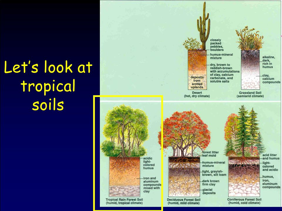 Let's look at tropical soils