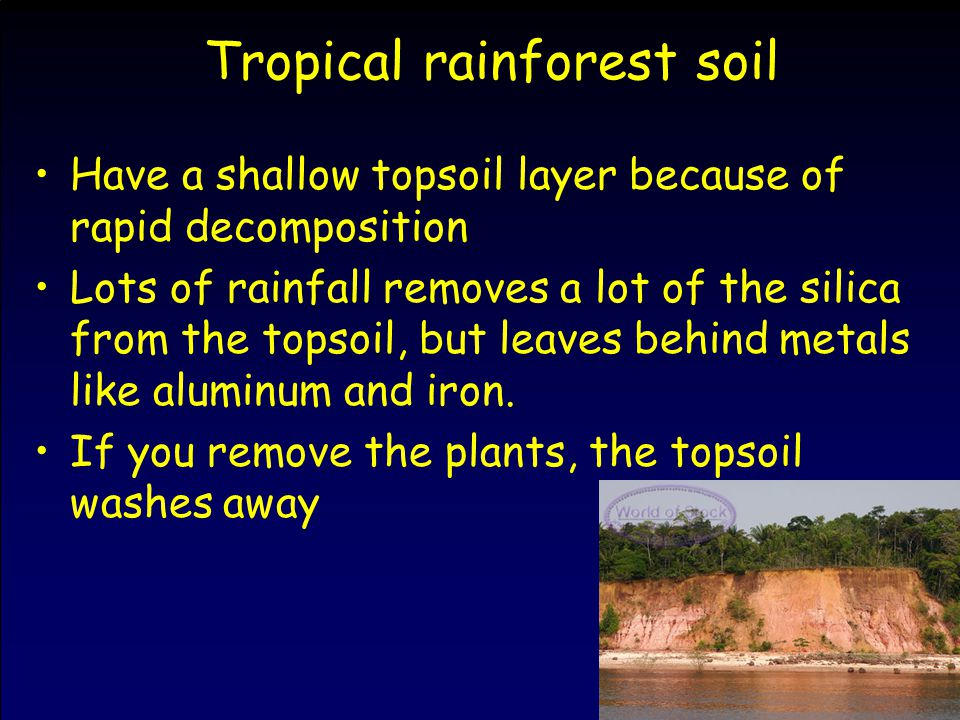 Tropical rainforest soil Have a shallow topsoil layer because of rapid decomposition Lots of rainfall removes a lot of the silica from the topsoil, bu