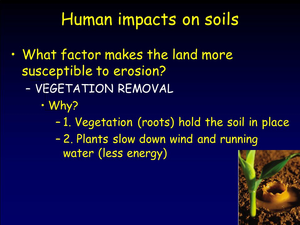 Human impacts on soils What factor makes the land more susceptible to erosion? –VEGETATION REMOVAL Why? –1. Vegetation (roots) hold the soil in place