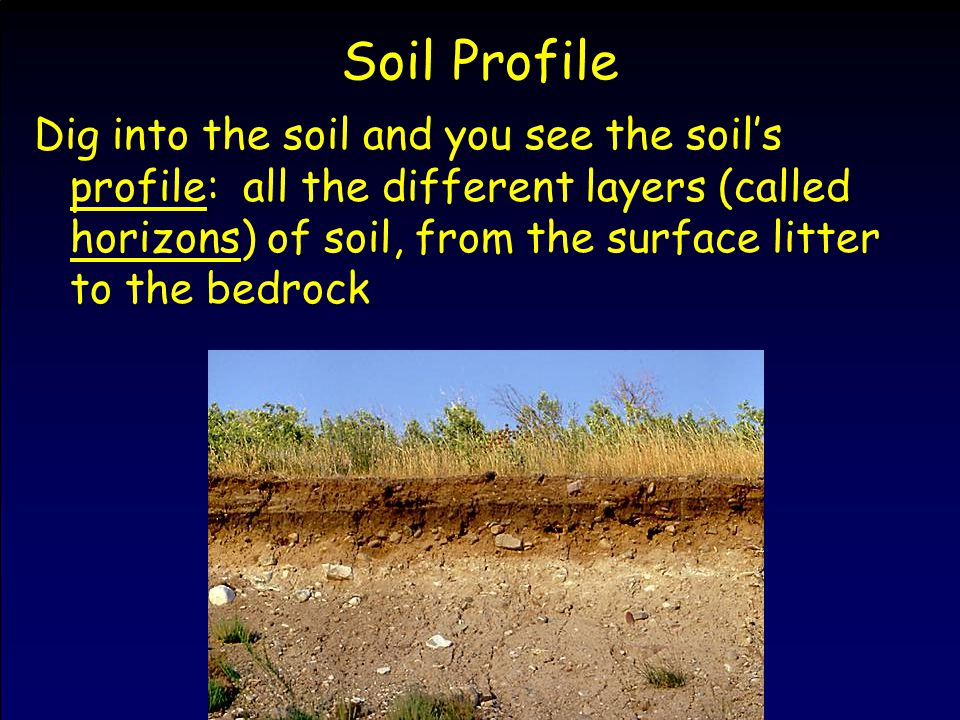 Soil Profile Dig into the soil and you see the soil's profile: all the different layers (called horizons) of soil, from the surface litter to the bedrock