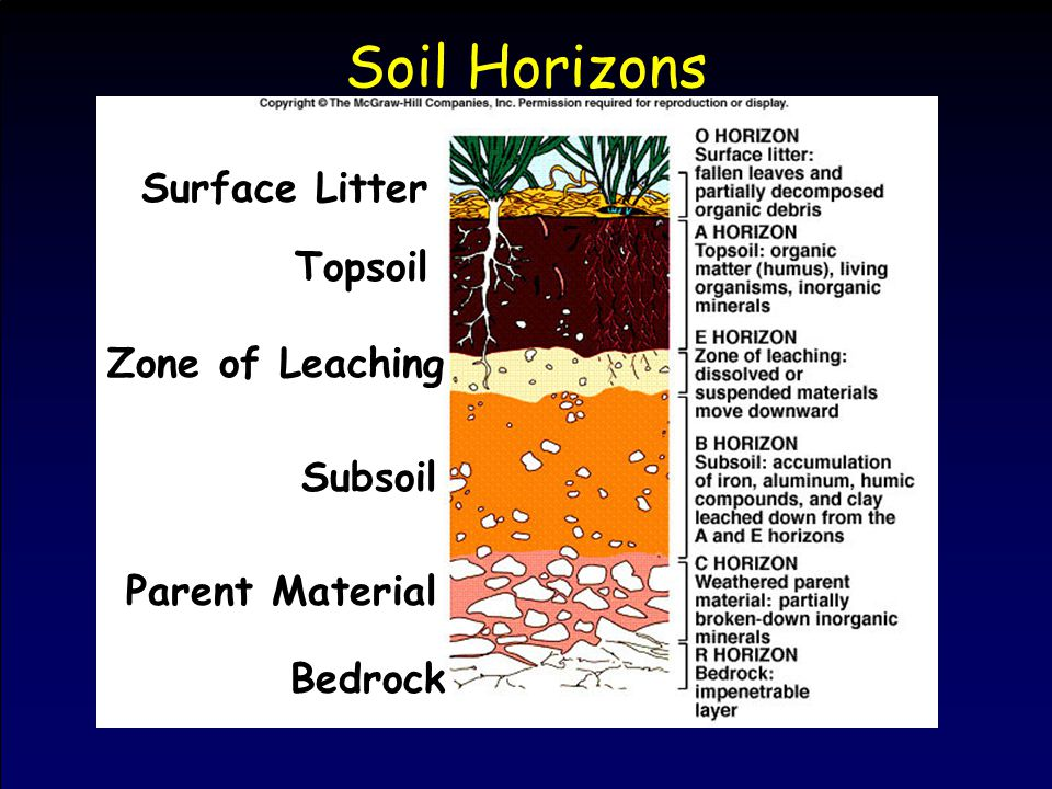 Soil Horizons Topsoil Zone of Leaching Subsoil Parent Material Bedrock Surface Litter