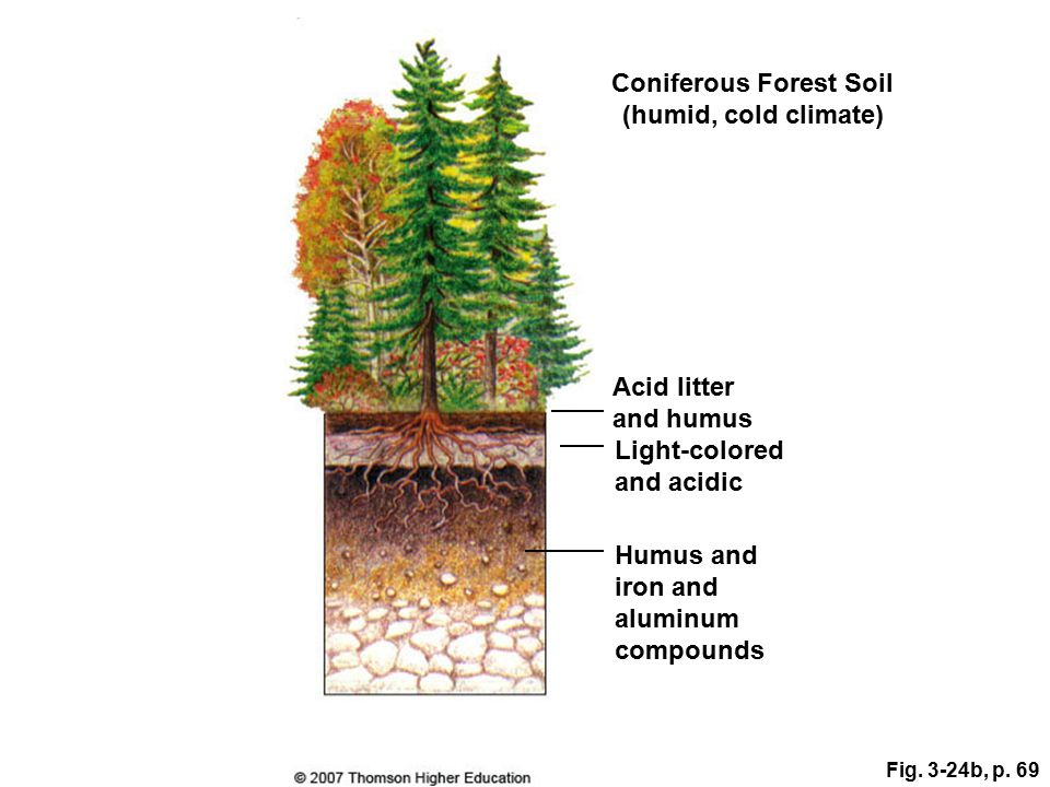 Fig. 3-24b, p. 69 Coniferous Forest Soil (humid, cold climate) Light-colored and acidic Acid litter and humus Humus and iron and aluminum compounds