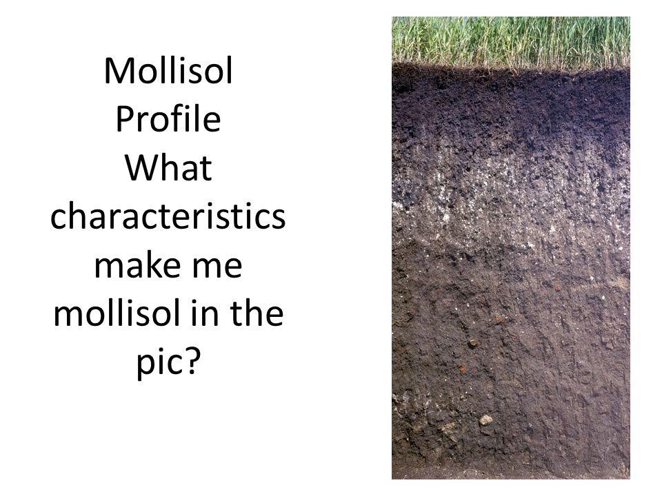 Mollisol Profile What characteristics make me mollisol in the pic?