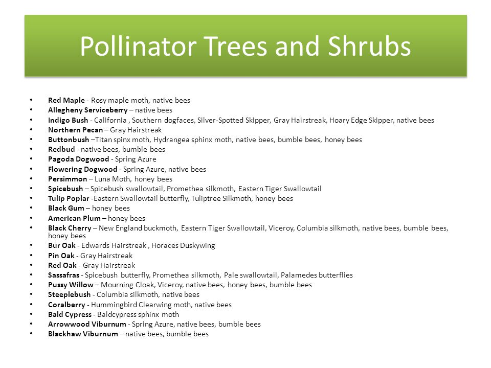 Pollinator Trees and Shrubs Red Maple - Rosy maple moth, native bees Allegheny Serviceberry – native bees Indigo Bush - California, Southern dogfaces, Silver-Spotted Skipper, Gray Hairstreak, Hoary Edge Skipper, native bees Northern Pecan – Gray Hairstreak Buttonbush –Titan spinx moth, Hydrangea sphinx moth, native bees, bumble bees, honey bees Redbud - native bees, bumble bees Pagoda Dogwood - Spring Azure Flowering Dogwood - Spring Azure, native bees Persimmon – Luna Moth, honey bees Spicebush – Spicebush swallowtail, Promethea silkmoth, Eastern Tiger Swallowtail Tulip Poplar -Eastern Swallowtail butterfly, Tuliptree Silkmoth, honey bees Black Gum – honey bees American Plum – honey bees Black Cherry – New England buckmoth, Eastern Tiger Swallowtail, Viceroy, Columbia silkmoth, native bees, bumble bees, honey bees Bur Oak - Edwards Hairstreak, Horaces Duskywing Pin Oak - Gray Hairstreak Red Oak - Gray Hairstreak Sassafras - Spicebush butterfly, Promethea silkmoth, Pale swallowtail, Palamedes butterflies Pussy Willow – Mourning Cloak, Viceroy, native bees, honey bees, bumble bees Steeplebush - Columbia silkmoth, native bees Coralberry - Hummingbird Clearwing moth, native bees Bald Cypress - Baldcypress sphinx moth Arrowwood Viburnum - Spring Azure, native bees, bumble bees Blackhaw Viburnum – native bees, bumble bees