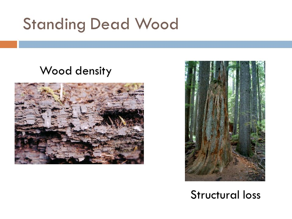 Standing Dead Wood Wood density Structural loss