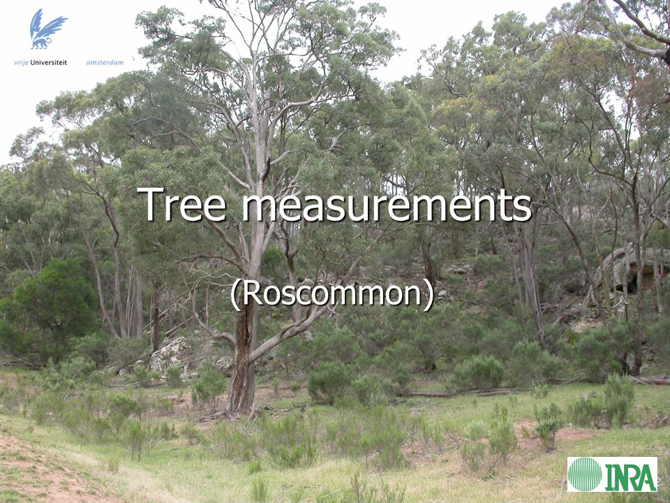 Tree measurements (Roscommon)