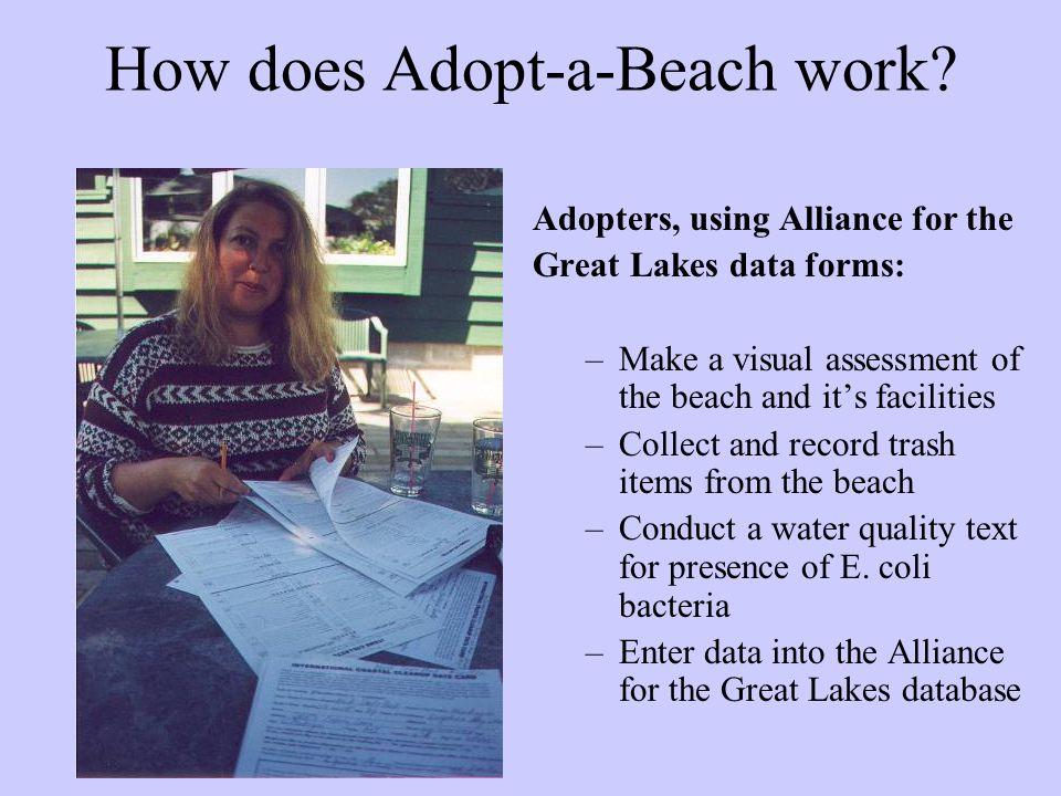 How does Adopt-a-Beach work.