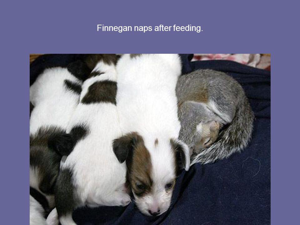 Finnegan naps after feeding.