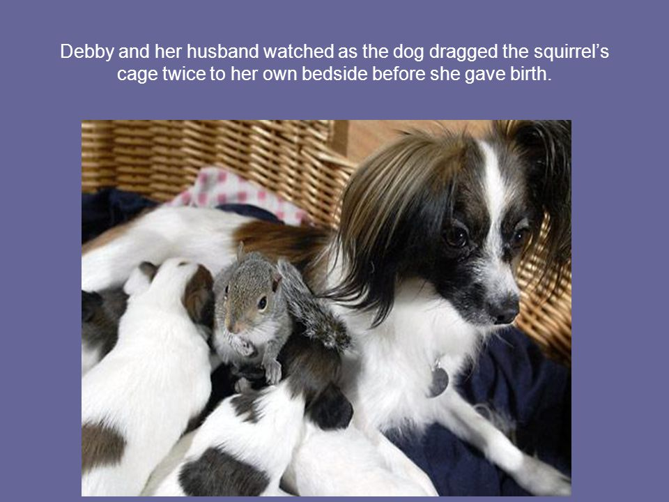 Debby and her husband watched as the dog dragged the squirrel's cage twice to her own bedside before she gave birth.