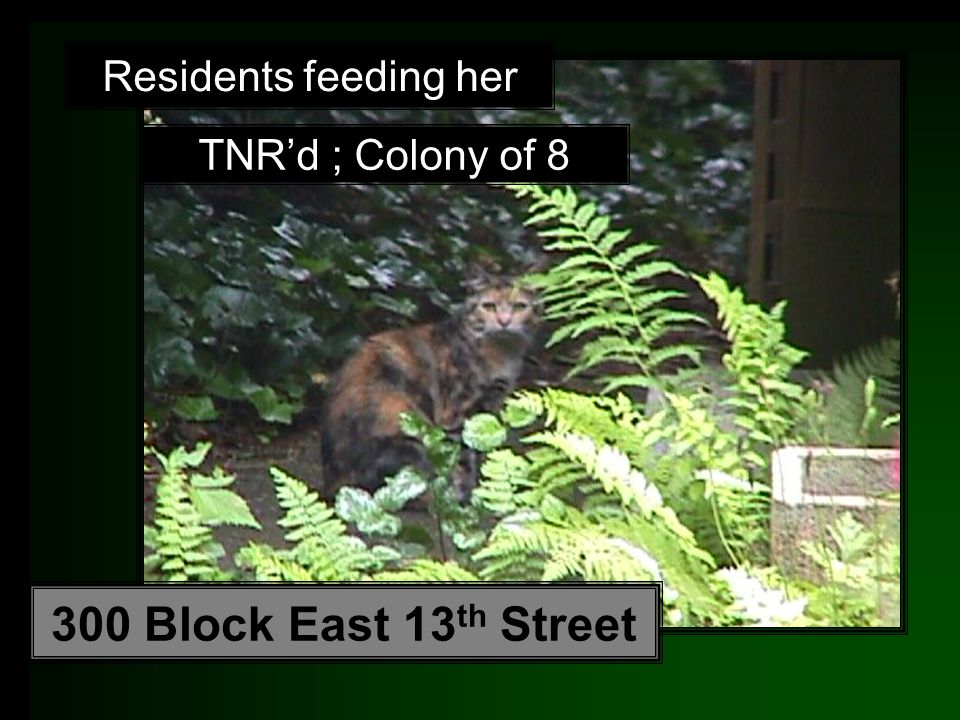 Residents feeding her TNR'd ; Colony of 8 300 Block East 13 th Street