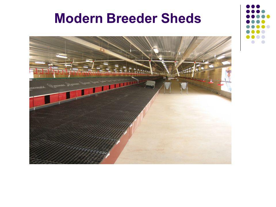 Modern Breeder Sheds