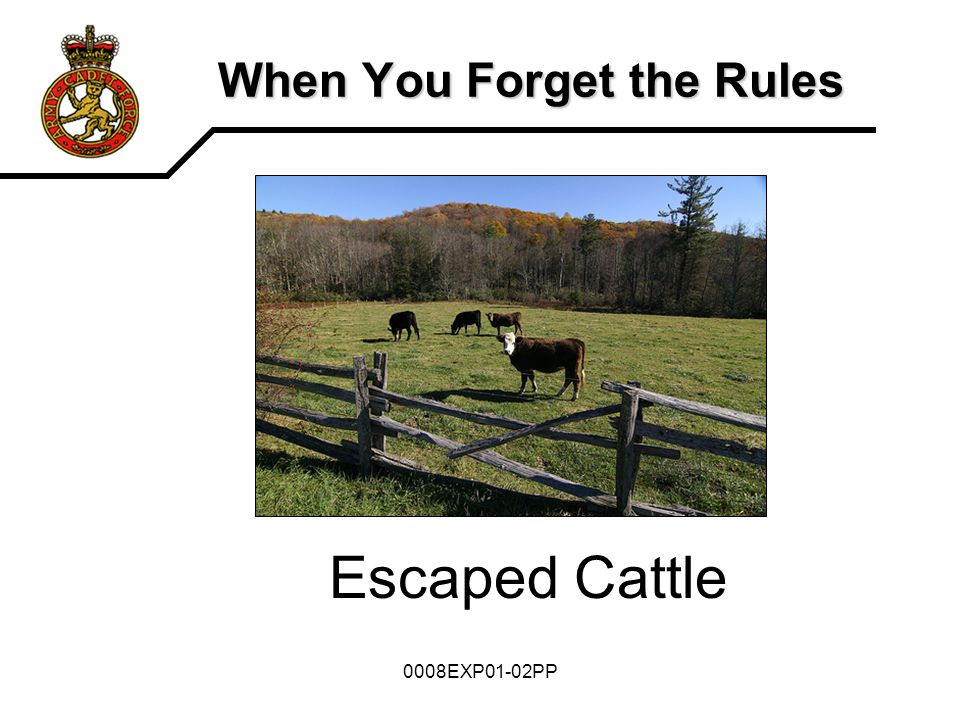 0008EXP01-02PP When You Forget the Rules Escaped Cattle