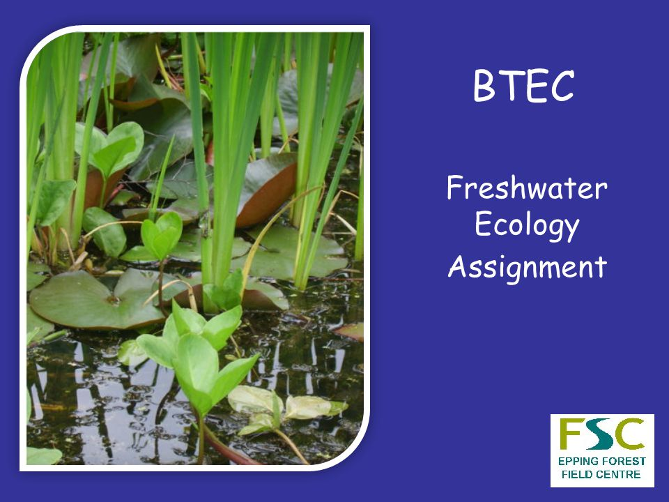 BTEC Freshwater Ecology Assignment