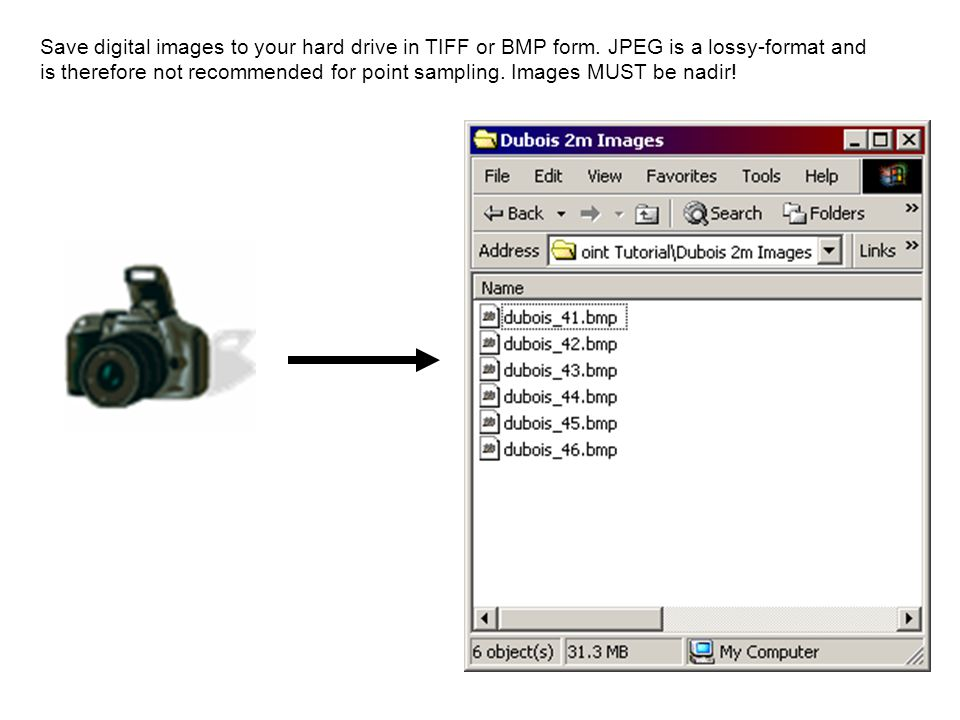Export the processed image from VegMeasure or Imagine as a TIF or BMP, and run both the original and processed images through SamplePoint.