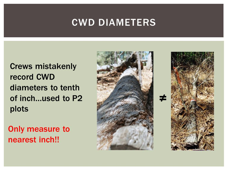 CWD DIAMETERS Crews mistakenly record CWD diameters to tenth of inch…used to P2 plots Only measure to nearest inch!.