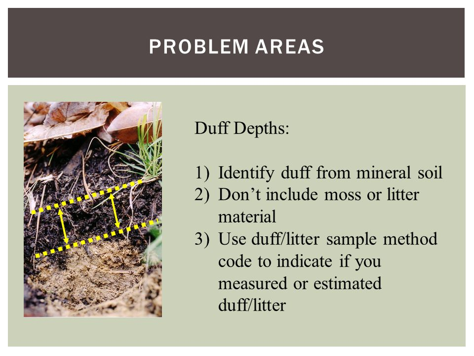 PROBLEM AREAS Duff Depths: 1)Identify duff from mineral soil 2)Don't include moss or litter material 3)Use duff/litter sample method code to indicate if you measured or estimated duff/litter