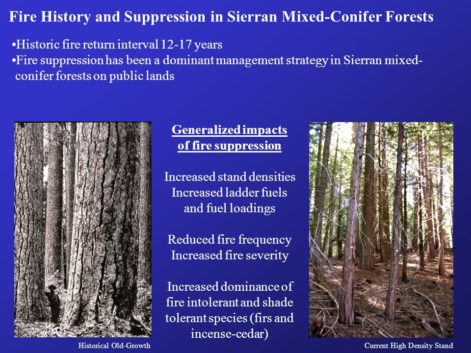 Historic fire return interval 12-17 years Fire suppression has been a dominant management strategy in Sierran mixed- conifer forests on public lands G