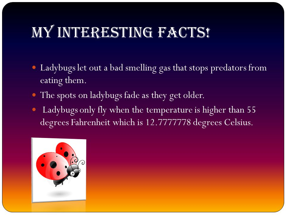 MY INTERESTING FACTS.Ladybugs let out a bad smelling gas that stops predators from eating them.